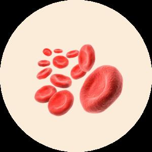 pyanemia